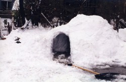 Survival Shelters Guide
