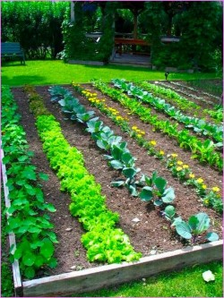 Another Raised Vegetable Garden I Love!