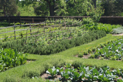 What a Gorgeous Veggie Garden!