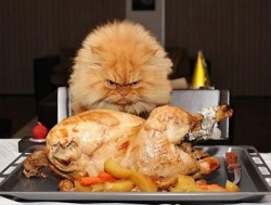 I'm a Lion, Don't Come Near This Turkey