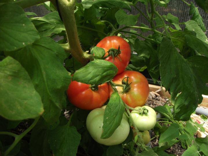 Quick Guide for the Beginner Vegetable Gardener