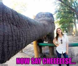 Elephants take the best selfies