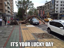 It's your lucky day
